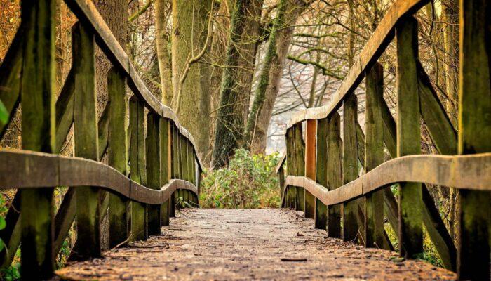 Brücke Herbst
