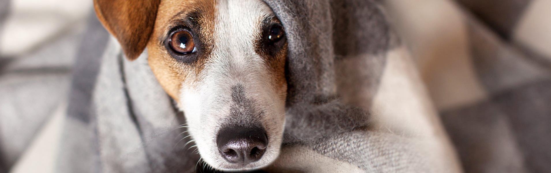 hund decke bielefelder hof